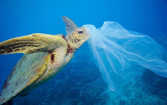 Dakikada 33 bi 800 plastik şişe Akdeniz'e karışıyor, en çok İtalya ve Türkiye kıyılarına vuruyor