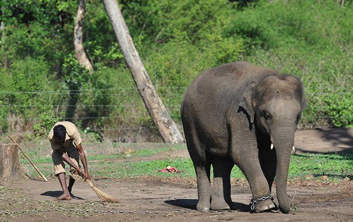 Fil avcılarını ihbar edenlere lüks otelde konaklama ödülü