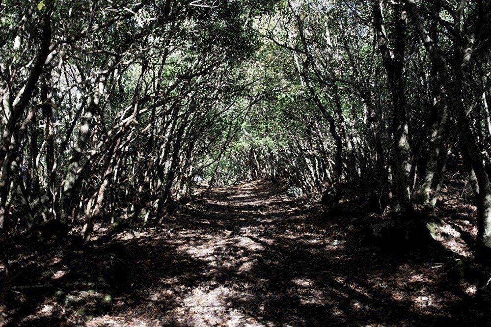 'İntihar Ormanı' olarak bilinen Aokigahara