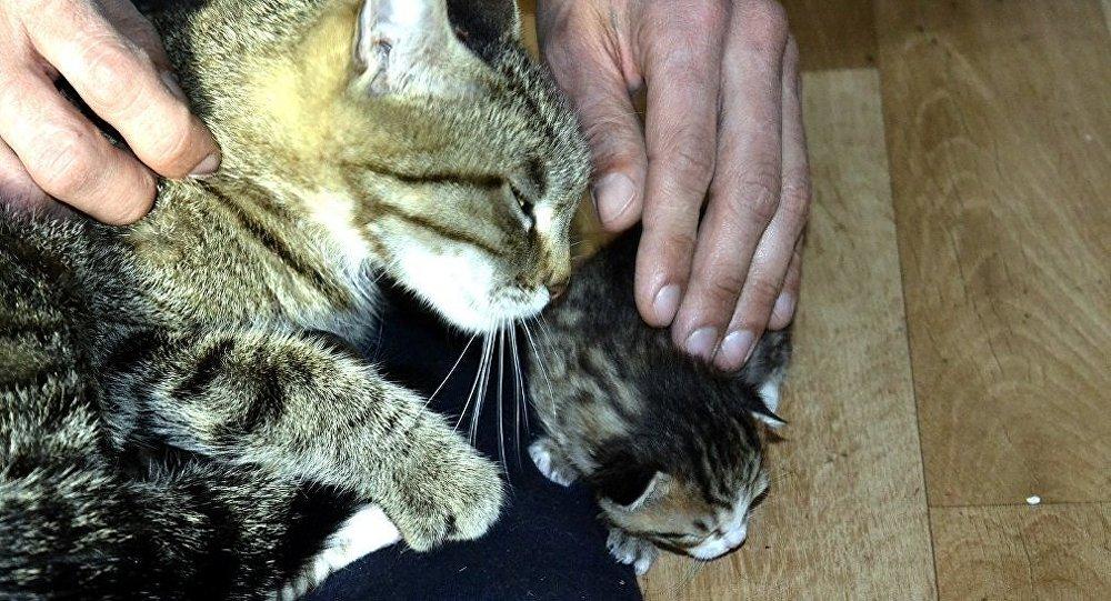 Soğukta kalan anne kedi ve 5 yavrusu kurtarıldı