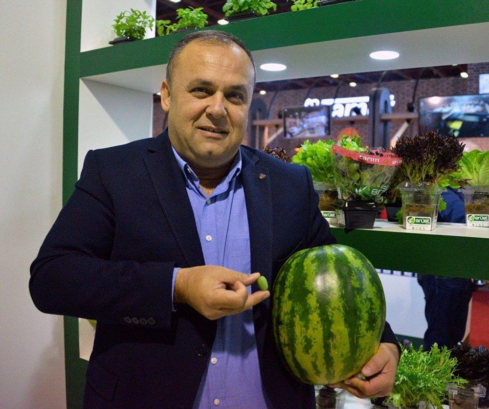 Antalya'da bir tarım firmasının ürettiği zeytin kadar karpuz