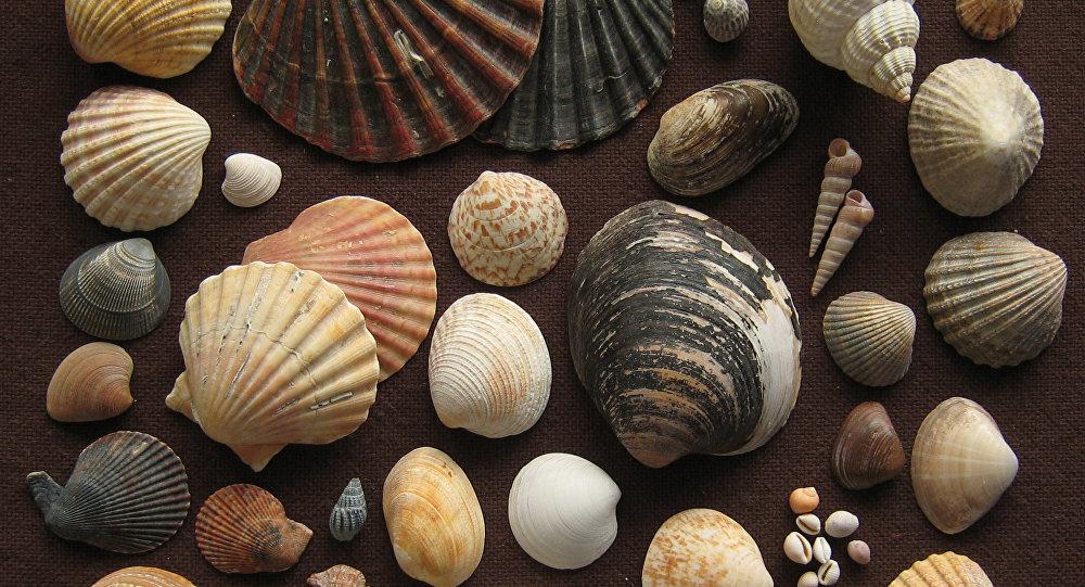 Deniz kabuğu koleksiyonunda 460 milyon yıllık fosil bulundu