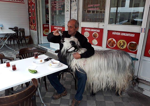 'Burada keçimle beraber kahvaltı ediyorduk, köpek bir anda saldırdı'