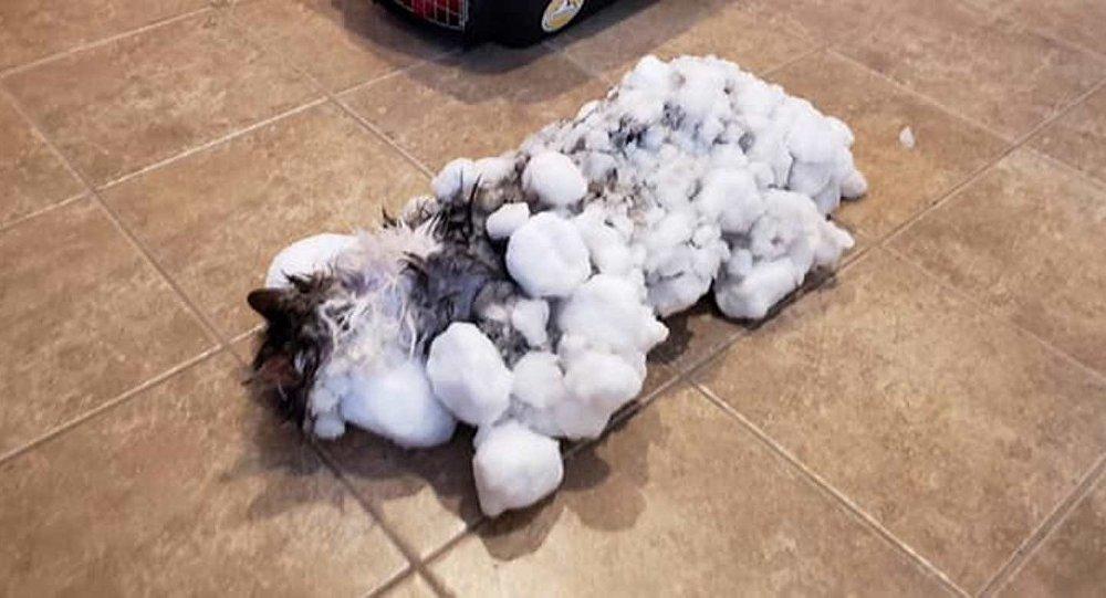 Soğuk havada donmuş kedi kurtarıldı