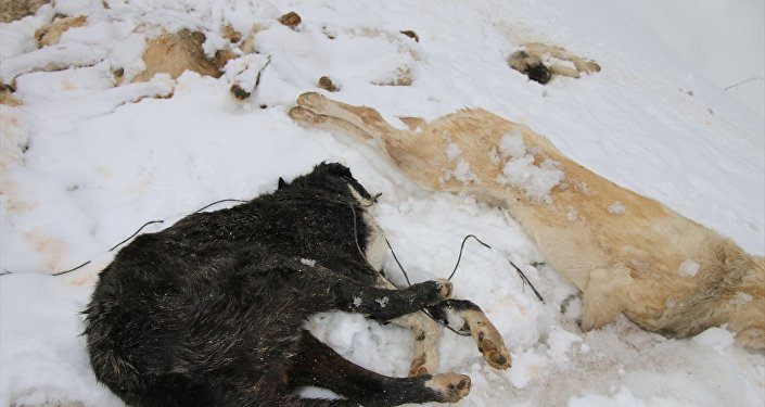 Konya'nın Bozkır ilçesinde 7 köpek, ayakları bağlı halde ölü bulundu.