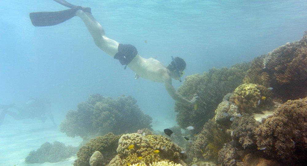 Avustralya Büyük set Resifi