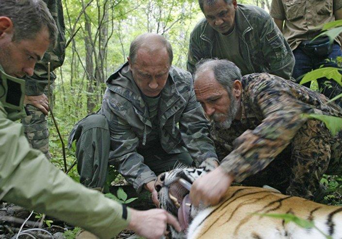 Haberde Rusya Devlet Başkanı Vladimir Putin'in kaplan avına çıktığı ileri sürülmüş, iddia güçlendirilmek için de Rus liderin yerde hareketsiz yatan bir kaplanla olduğu fotoğrafı paylaşılmıştı. Ancak haber gerçeği yansıtmıyordu. Fotoğraf 2008'de Rusya'daki ulusal kaplan koruma programı çerçevesinde Putin'in katıldığı bir çalışma sırasında çekilmişti. Putin, kaplanı öldürmüyor, aksine türün korunmasına yönelik bir çalışma çerçevesinde hayvana bir GPS izleme aygıtı takıyordu.