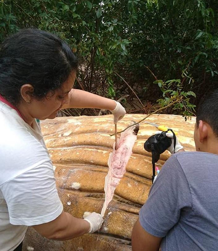 Amazon ormanlarında kambur balina ölüsü bulundu
