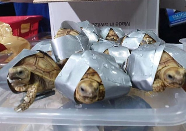 Filipinler -  Kaplumbağa ele geçirildi