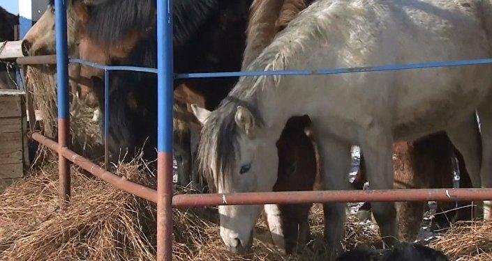 Ölüme gönderilen atları kurtarıp barınak kurdu