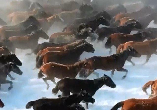 'Cennetten gelen atların diyarı'