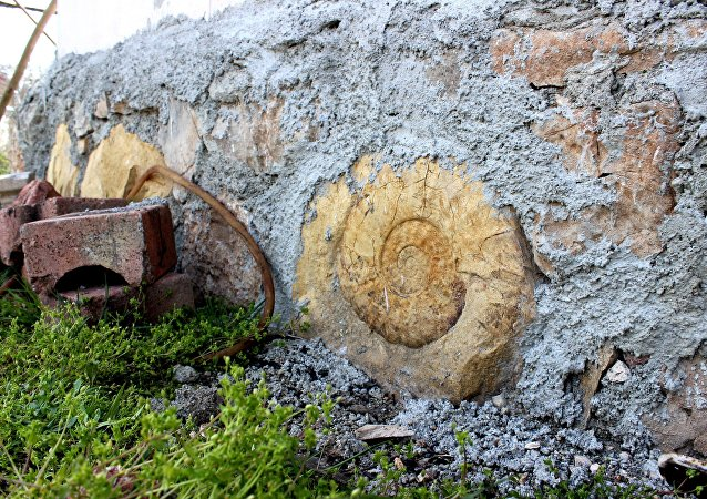 Salyangoz fosili