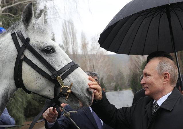 Vladimir Putin, kendisine hediye edilen atla