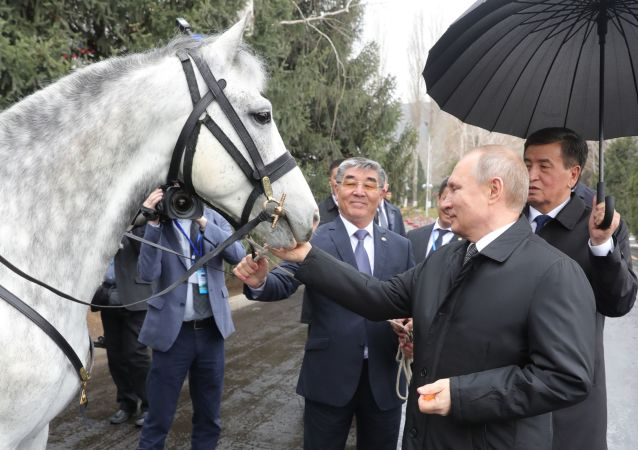 Putin'e hediye edilen hayvanlar