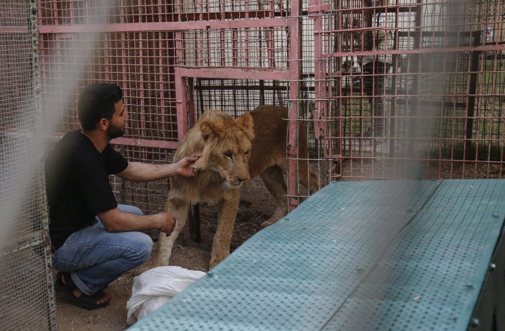 Gazze'deki hayvanat bahçesinde kötü koşullarda yaşayan hayvanlar Ürdün'e taşındı.