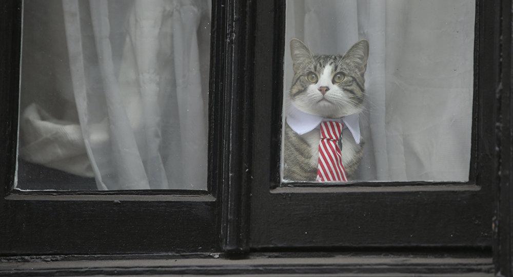 Assange'ın avukatı: Kedi James kurtarıldı ve iyi