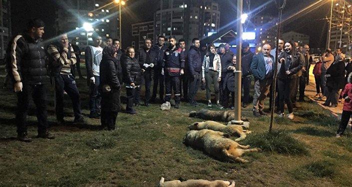 Ankara Batıkent'te sokak köpekleri zehirlendi.