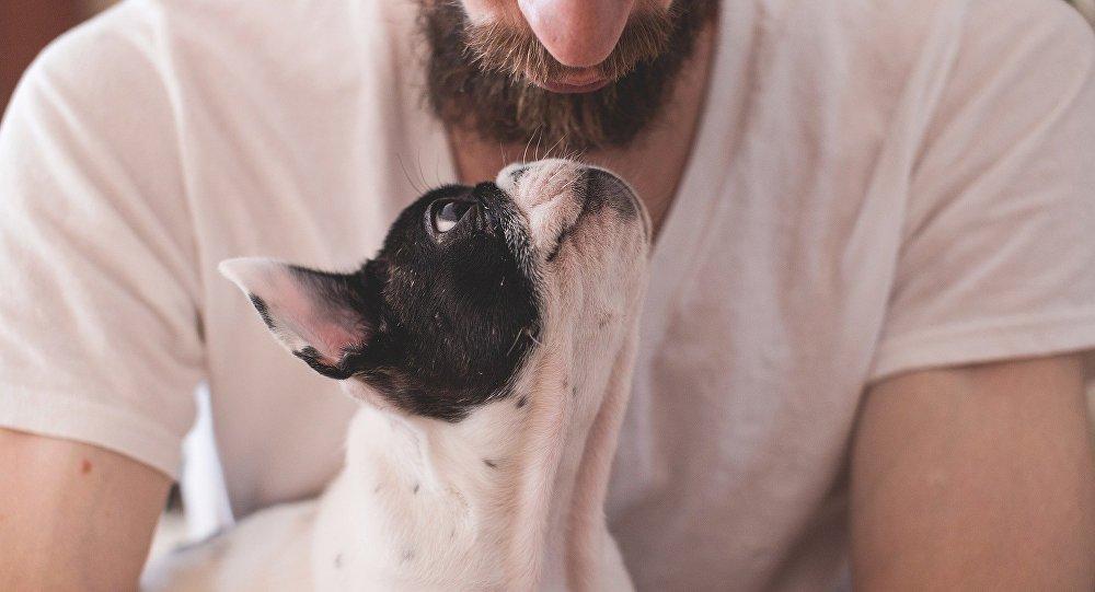 Bir köpek sahibi