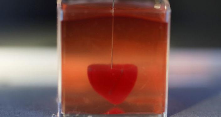Üç boyutlu yazıcıyla yapılan insan kalbi