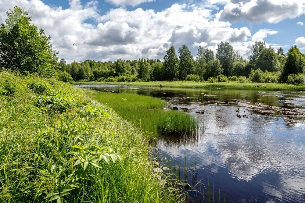 Karelya'daki Pyalma Nehri.