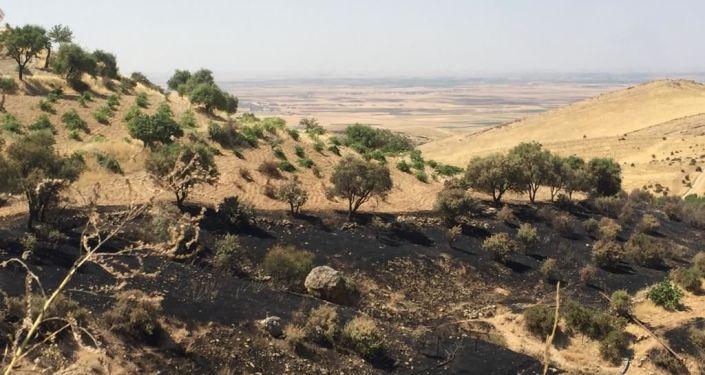 Deyrulzafaran Manastırı zeytinliklerinde yangın: 700'e yakın ağaç kül oldu