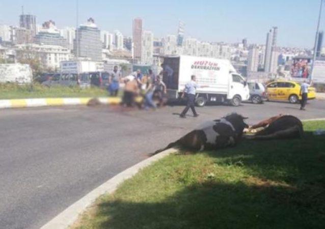 Kapalı kasada havasız kalan kurbanlık, cadde ortasında kesildi