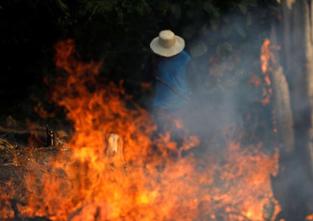Brezilya'da kasıtlı yangın çıkarılan Amazon ormanları, kerestecilik, çiftçilik ve madencilikle yağmalanıyor.
