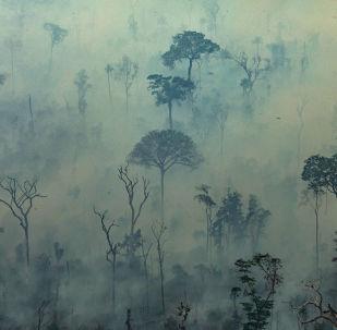 ABD Havacılık ve Uzay Ajansının (NASA) uydu verileri, Brezilya'da Amazon Yağmur Ormanları'nda devam eden yangınların son 9 yıldaki en yoğun düzeye ulaştığını ortaya koydu.