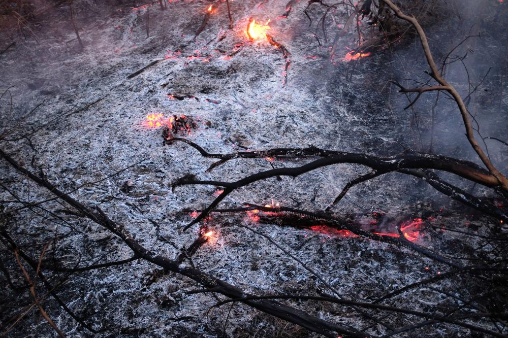 Brezilya'daki Amazon ormanlarındaki yangın