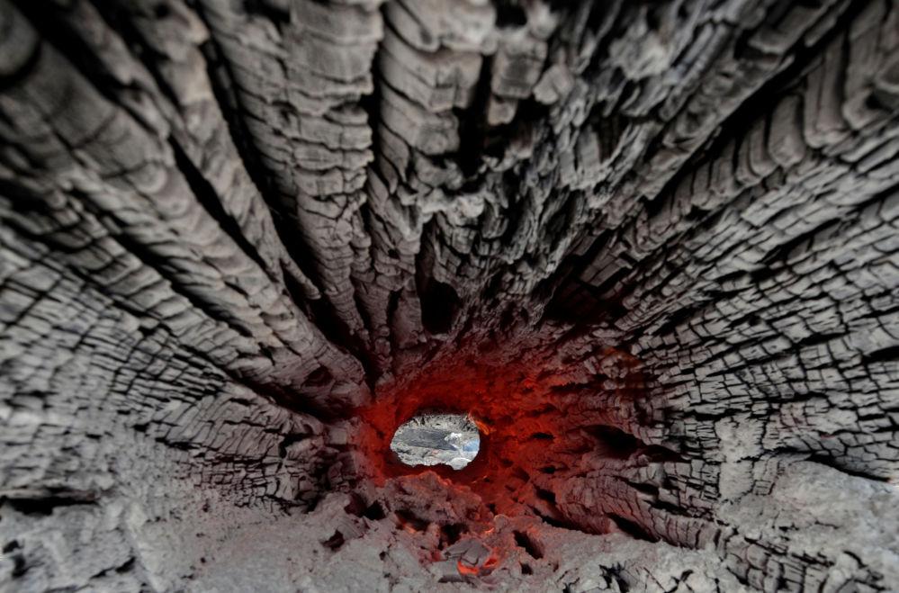 Amazon'un tropik ormanlarında devam eden yangınların sonucu olan yanmış bir ağaç gövdesi.