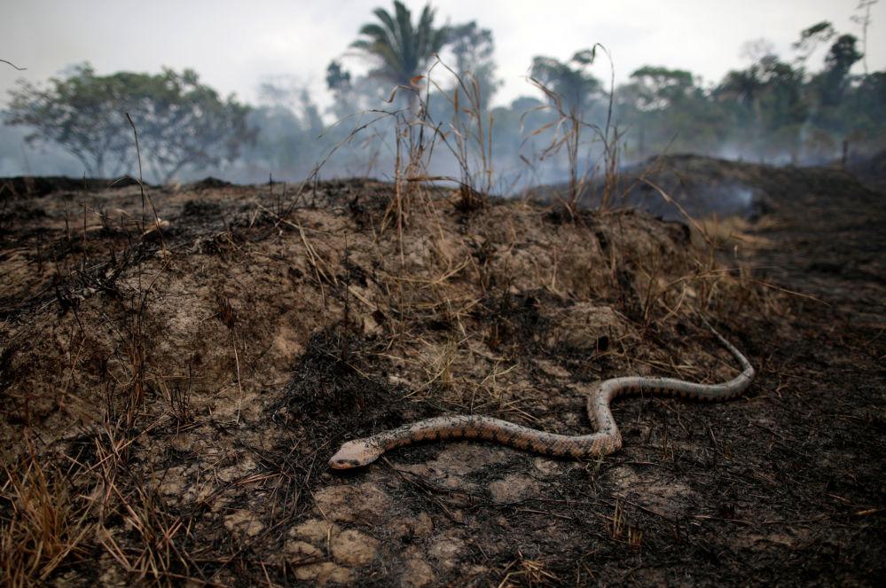 Brezilya'daki Amazon ormanlarındaki yangının sonuçları