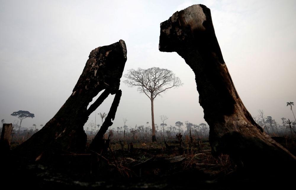 Amazon ormanlarından gelen görüntüler, yaşanan trajedinin boyutlarını gözler önüne seriyor