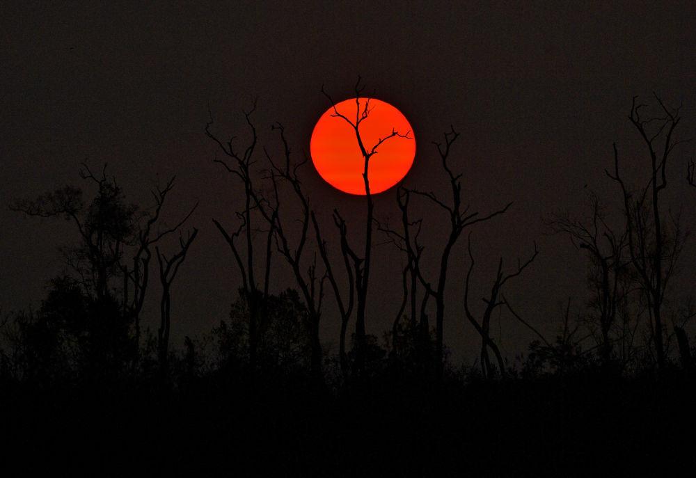 Amazon ormanlarındaki yangınların sonucu: yanmış ağaçlar.