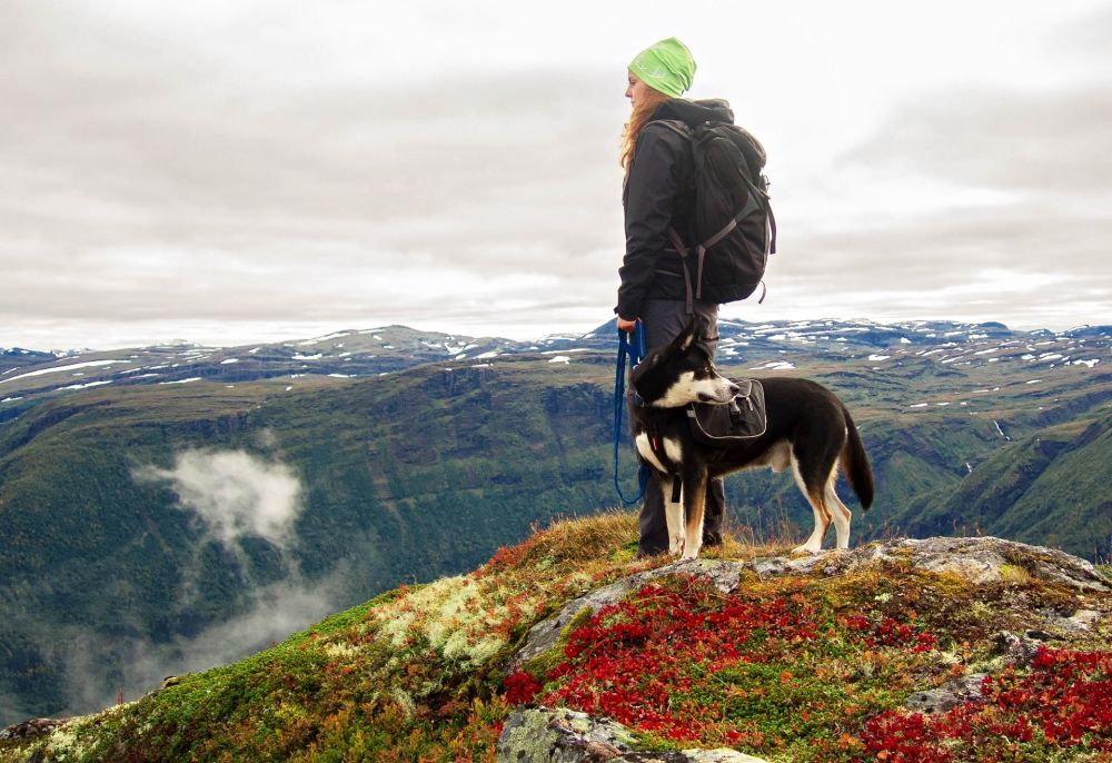 6. Norveç