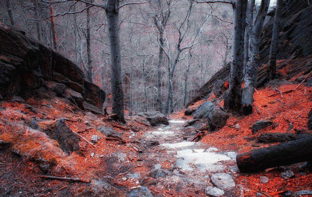 9. Polonya  Fotoğrafta: Polonya'nın güneybatısındaki Sudetes dağ sisteminin bir dağlık bölgesi Krkonoše'de orman manzarası.