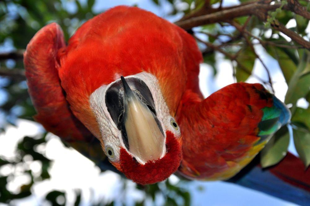 12. Venezüella  Fotoğrafta: Venezüella'daki bir ormanda yaşayan papağan.