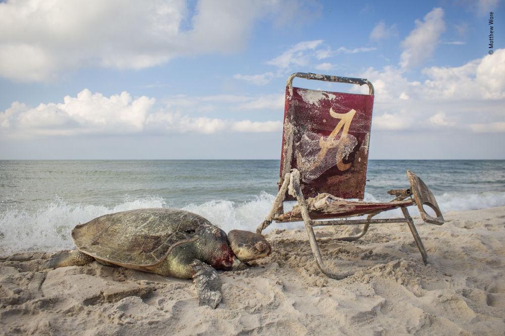 Yarışmanın 'Vahşi doğada fotoğraf muhabirliği' kategorisinde  takdir gören fotoğrafçı Matthew Ware'nin Beach waste isimli görüntüsü.