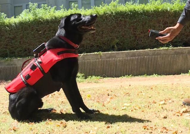 Köpekler için akıllı yelek