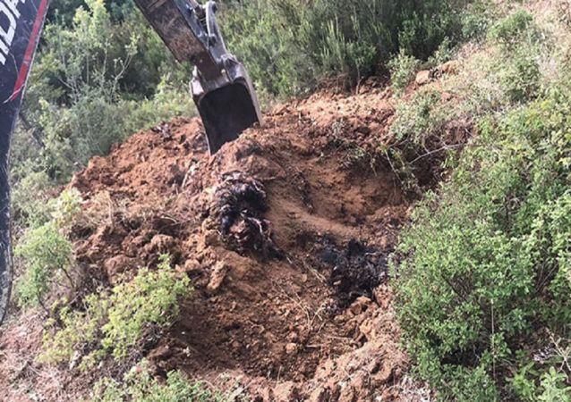 İznik'te toprağa gömülü 6 bin ölü tavuk bulundu