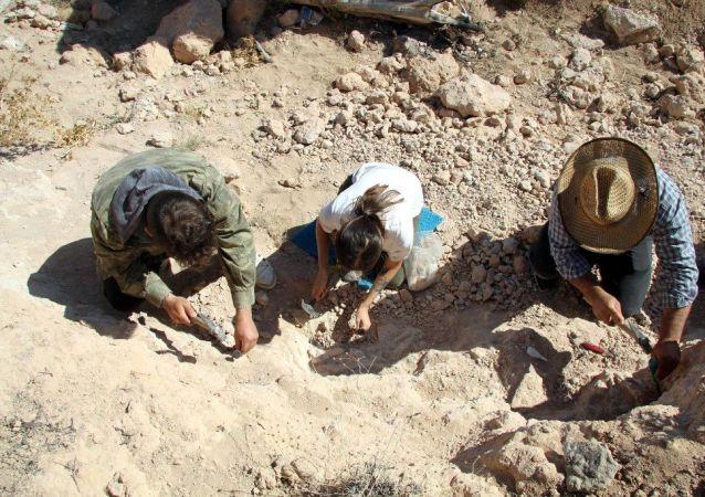 Kayseri'de 8 milyon yıllık yeni fosiller bulundu