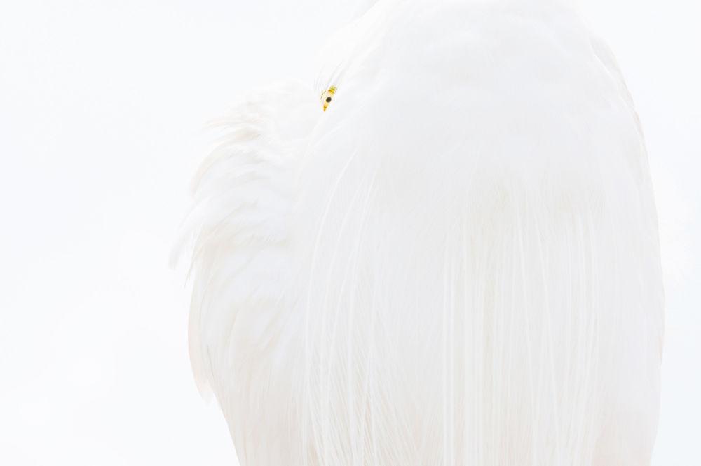 Kuşlar kategorisinin kazananı Alman fotoğrafçı  Dr Siegmar Bergfeld'in çalışması.