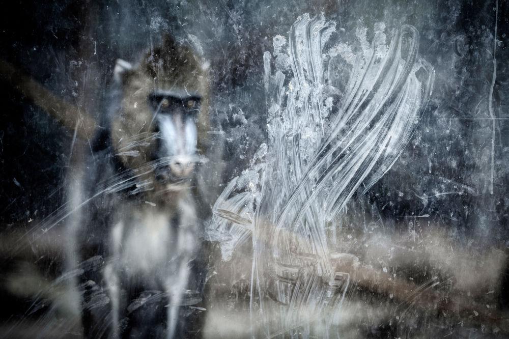 İnsan ve doğa kategorisinin kazananı İspanyol fotoğrafçı Miguel Ángel Rubio Robles'in  'Ellerim' isimli çalışması.