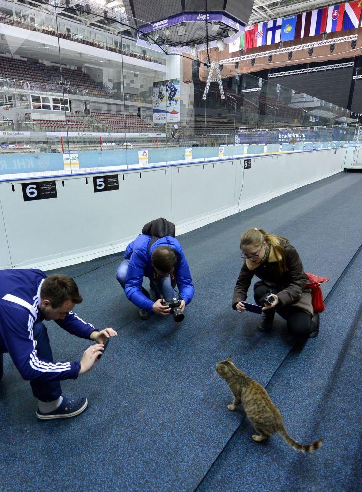 2014 yılında Rusya'nın Uzak Doğu bölgesindeki Vladivostok kentinin havaalanında Matroska isimli kedi, balık dükkanının vitrinine girerek toplam maliyeti yaklaşık bin dolar olan deniz ürünlerini yemişti. Bu olaydan sonra Rus basınının gündemine oturan Matroska, Amiral buz hokeyi kulübünün maskotu oldu. Sosyal medya hesaplarında 5 bin takipçisi bulunan bu kedi, Mart 2015'te de bir televizyon programına katıldı.  Fotoğrafta: Buz hokeyi kulübünün maskotu kedi Matroska'yı görüntüleyen fotoğrafçılar.