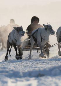 Rusya'nın Uzak Kuzey bölgesindeki yerli halkları nasıl yaşıyor?
