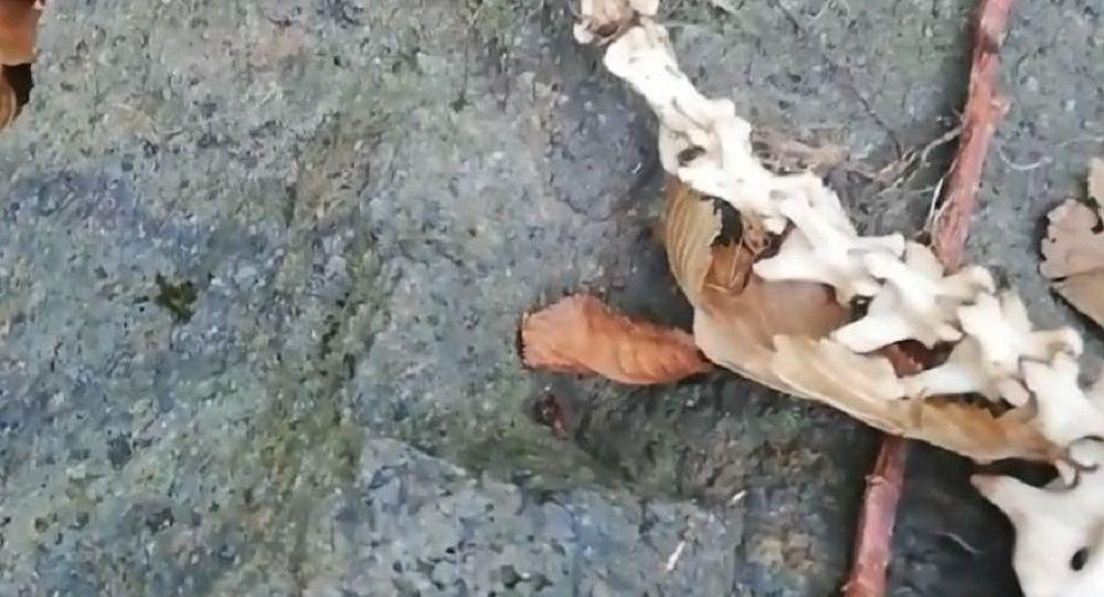 trabzonda iki ayaklı hayvan ile ilgili görsel sonucu
