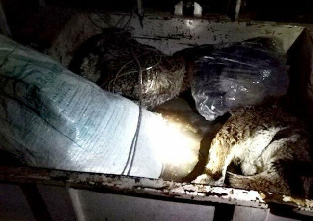 Tunceli'de yaban keçisi avlayan baba ve oğluna 50 bin lira ceza