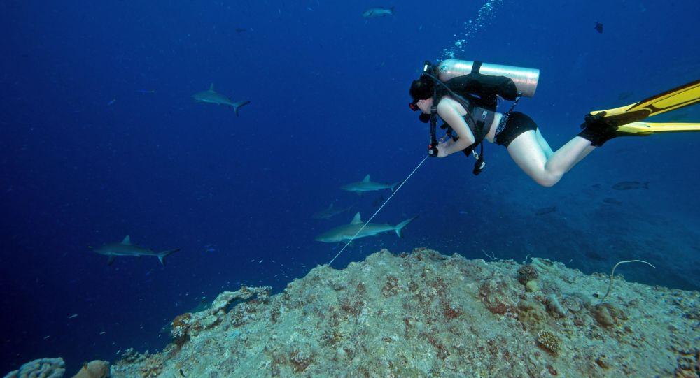 2009'da Palau'daki mercan resiflerinde çekilmiş bir kare
