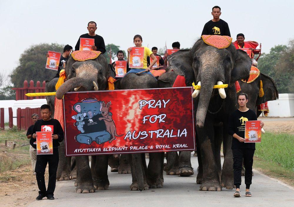 Tayland'ın Ayutthaya şehrinde filler ve öğrenciler, Avustralya'da ölen milyonlarca hayvan için yürüyüş gösterisi düzenledi.