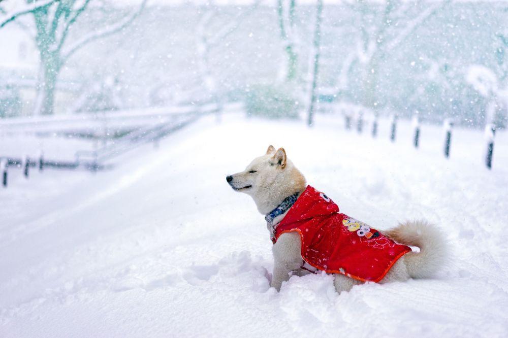 Karda yürüyen bir köpek.