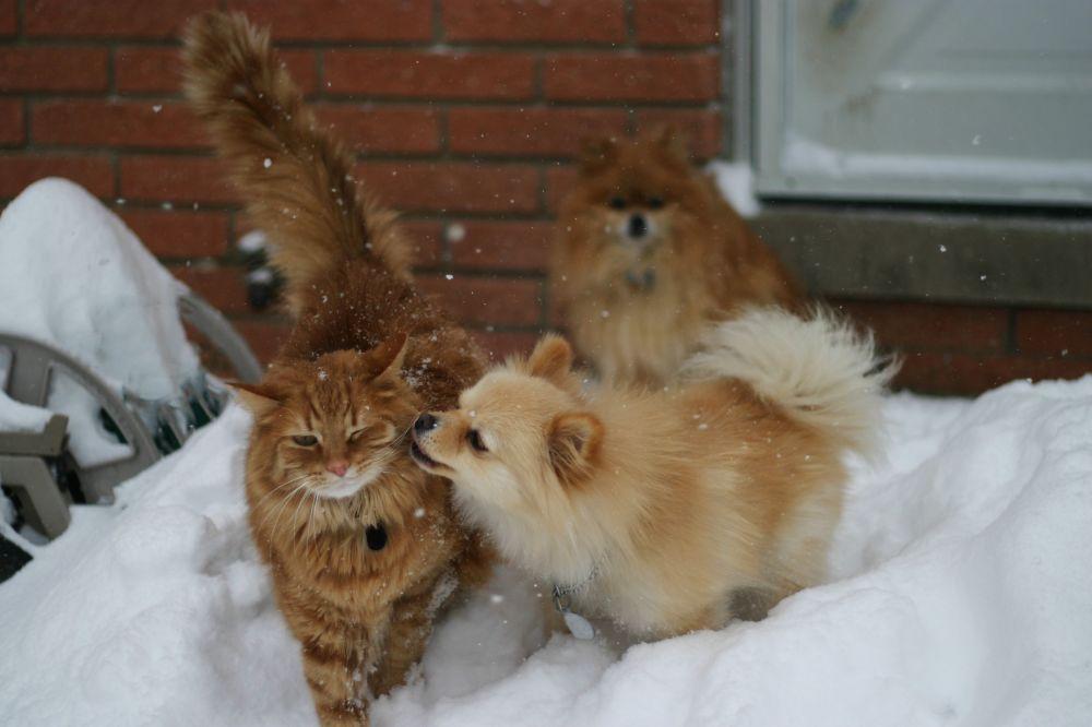 Kediyle köpeğin karda oyunları.